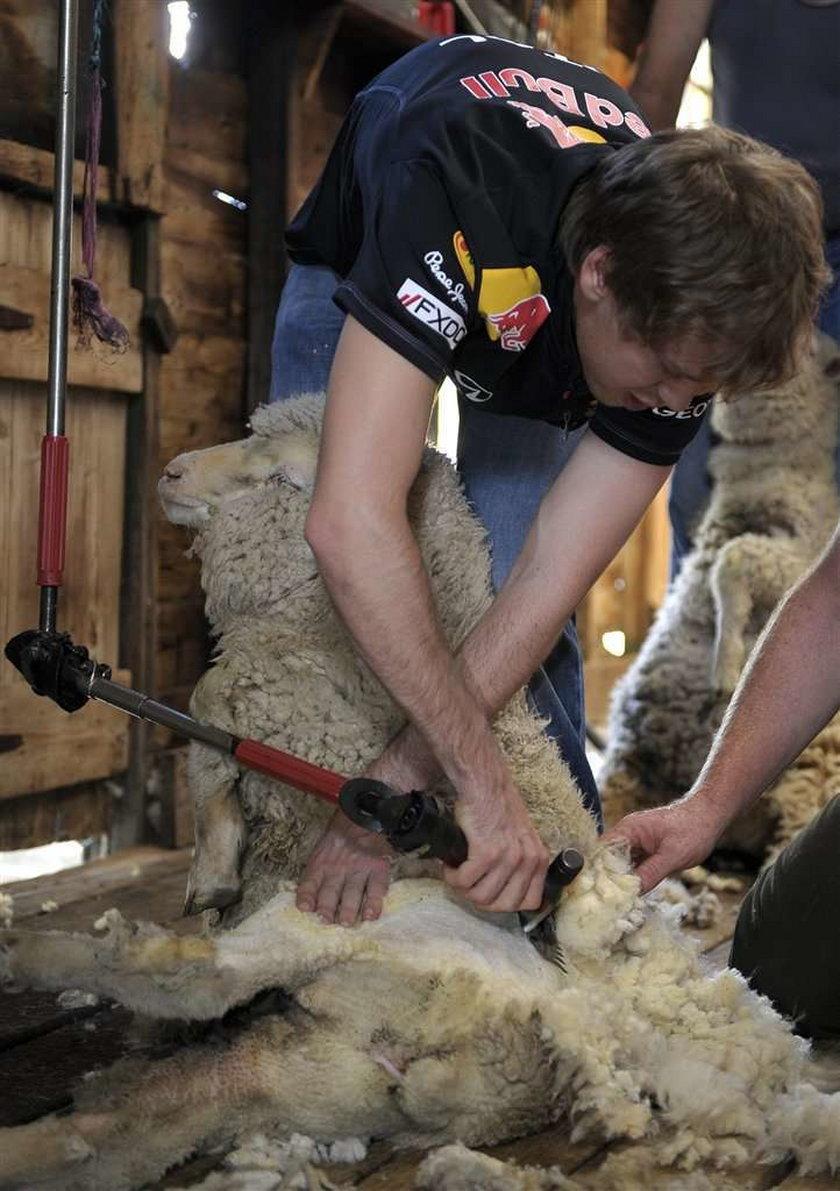 Sebastian Vettel goli owce