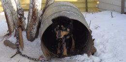 Psy mieszkały w metalowych beczkach!