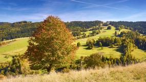 Wierchomla i Beskid Sądecki na jesień - wyprawa po złote runo