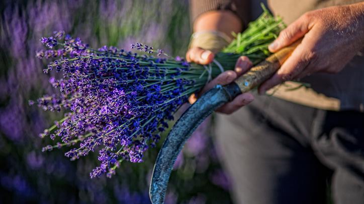 a gyógynövények miatt lefogy