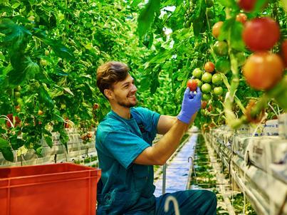 W rolnictwie pracuje sezonowo ok. 500 tys. osób w ciągu roku