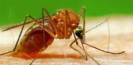 Rusza wojna z komarami