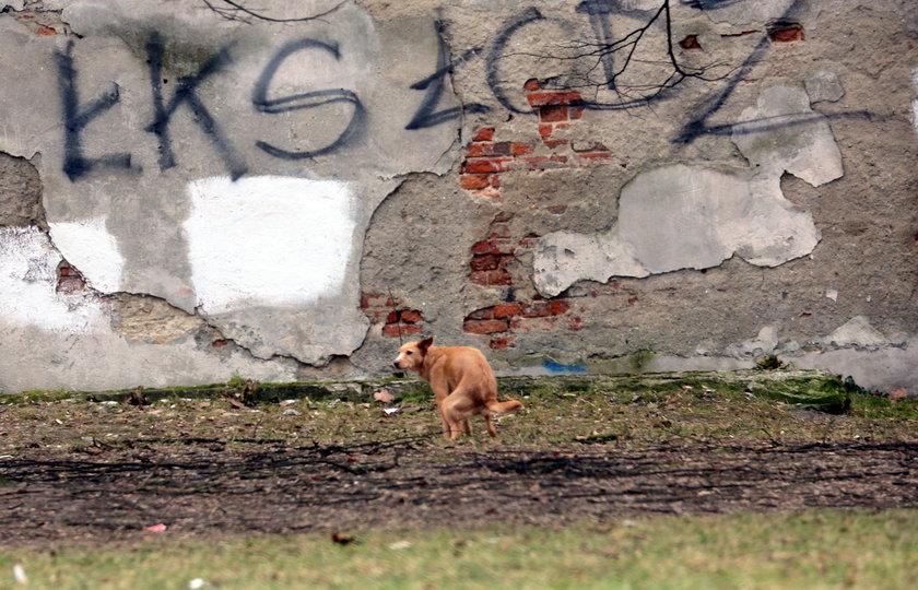 pies brudzący na skwerku w Łodzi