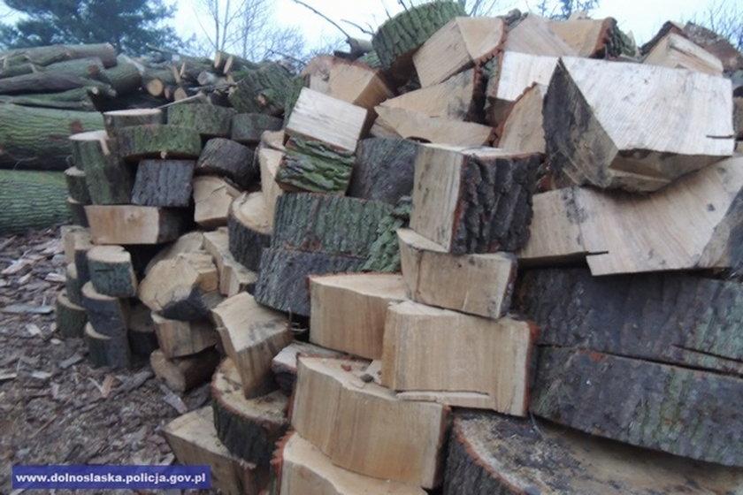 37-latek kradł drewno z lasu