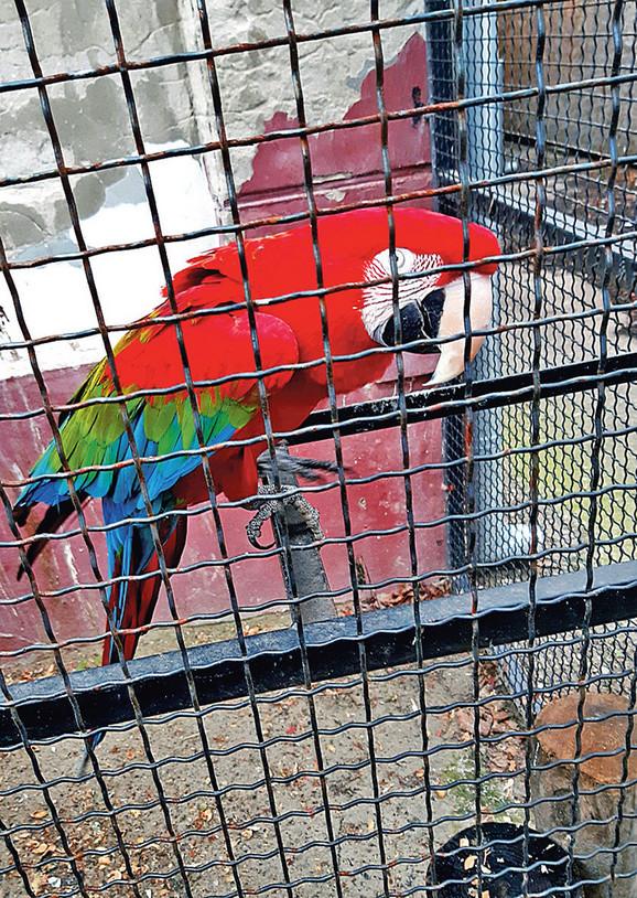 Papagaji ostaju u zoo-vrtu jer nemamo stanište za njih