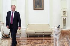 Akita, Vladimir Putin, Psi
