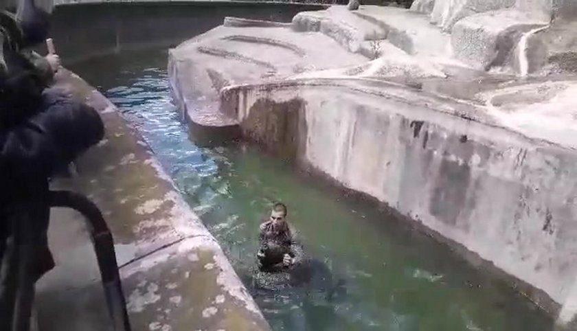 Intruz wtargnął na wybieg dla niedźwiedzi