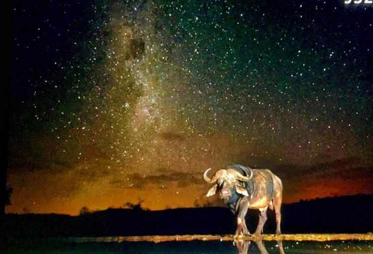 životinje noć1
