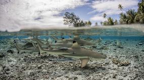 """Tydzień z rekinami: """"Rekiny u brzegu"""" we wtorek 22 sierpnia w Nat Geo Wild"""