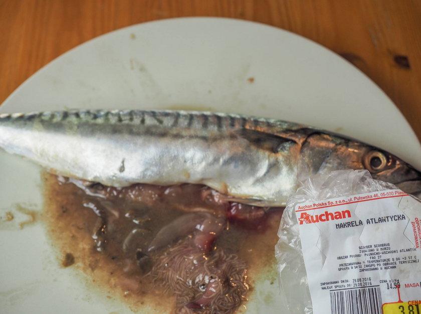 Ryba z robakami w Auchan