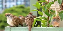 Gdy trzeba odstraszyć ptaki z balkonu czy ogrodu...
