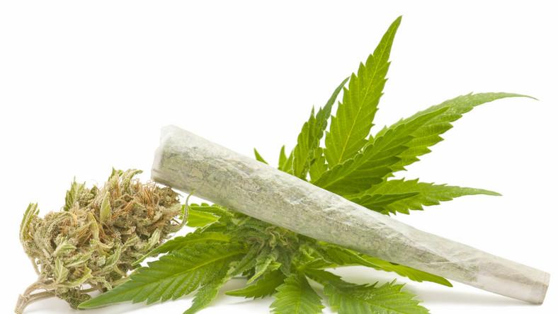 Gdzie marihuana jest legalna?