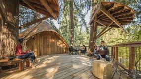 Microsoft ma domek na drzewie