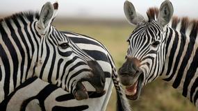Austriak dostał zgodę Trybunału Konstytucyjnego na używanie nazwiska Zebra