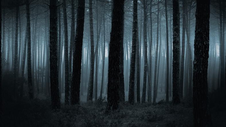 Ciała dziewięciu z poległych odnaleźli i pochowali w lesie okoliczni mieszkańcy