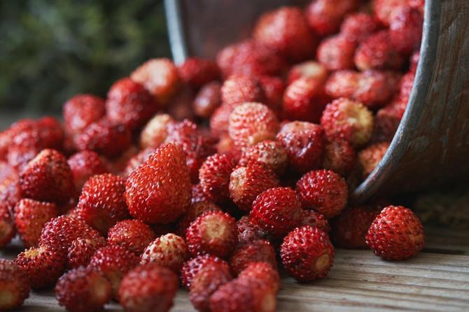 Čaj od šumske jagode je odličan za vitalnost