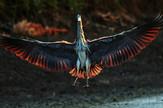 ptice foto Tanjug Jaroslav Pap