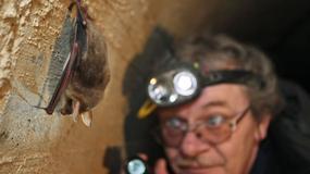 Liczenie nietoperzy w bunkrach Międzyrzeckiego Rejonu Umocnionego