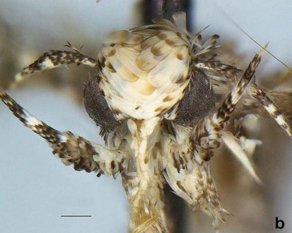 Moljac Neopalpa donaldtrumpi