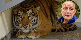 Tygrysy oszukały śmierć. Jackowski mówi nam, co się z nimi stanie