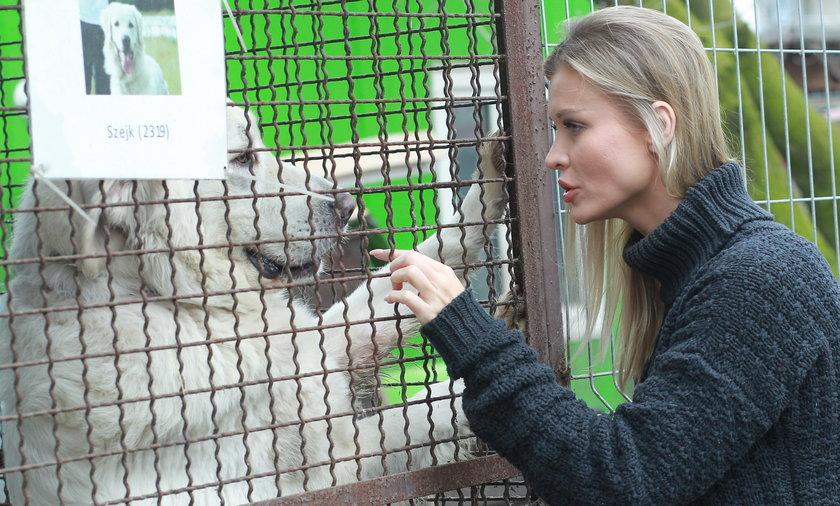 Joanna Krupa, schronisko, pies