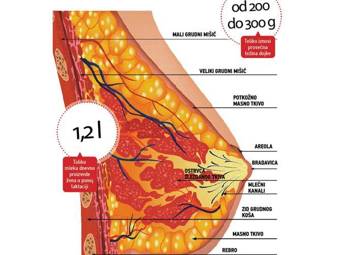 Promene na grudima za vreme ciklusa, u trudnoći i posle porođaja