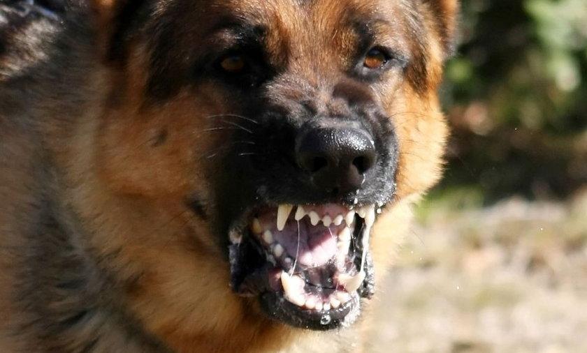 Psy zaatakowały nastolatki w Stalowej Woli