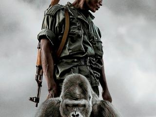 plakat film Virunga
