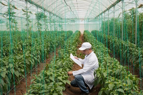 U Srbiji rapidno raste proizvodnja organske hrane