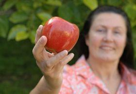 étrend menopauza idején