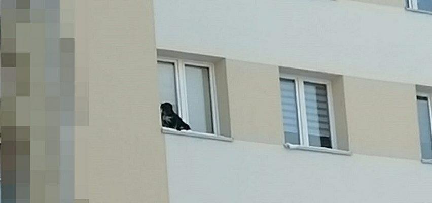 Wystawił psa na parapet na 9. piętrze. Jest finał sprawy