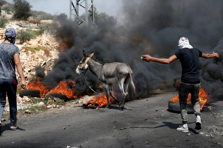 Palestinian protesters try to push a donkey away from the scene of clashes with Israeli troops follo