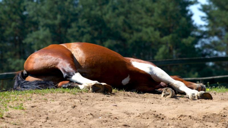 A ló jobb válla tört el hatalmas bukás után, elaltatták  /Illusztráció:Northfoto