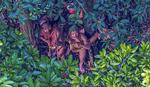 SAMI U DIVLJINI Prve fotografije neotkrivenog izolovanog plemena u Amazonu