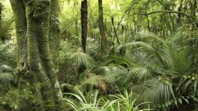 Coraz więcej pożarów w lasach Amazonii
