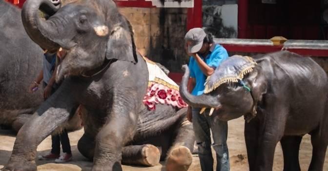 """Baby-Elefant """"Dumbo"""" stirbt, weil Zoo ihn zu gefährlichen Tricks zwingt"""