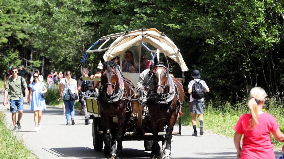 Konie w drodze nad Morskie Oko