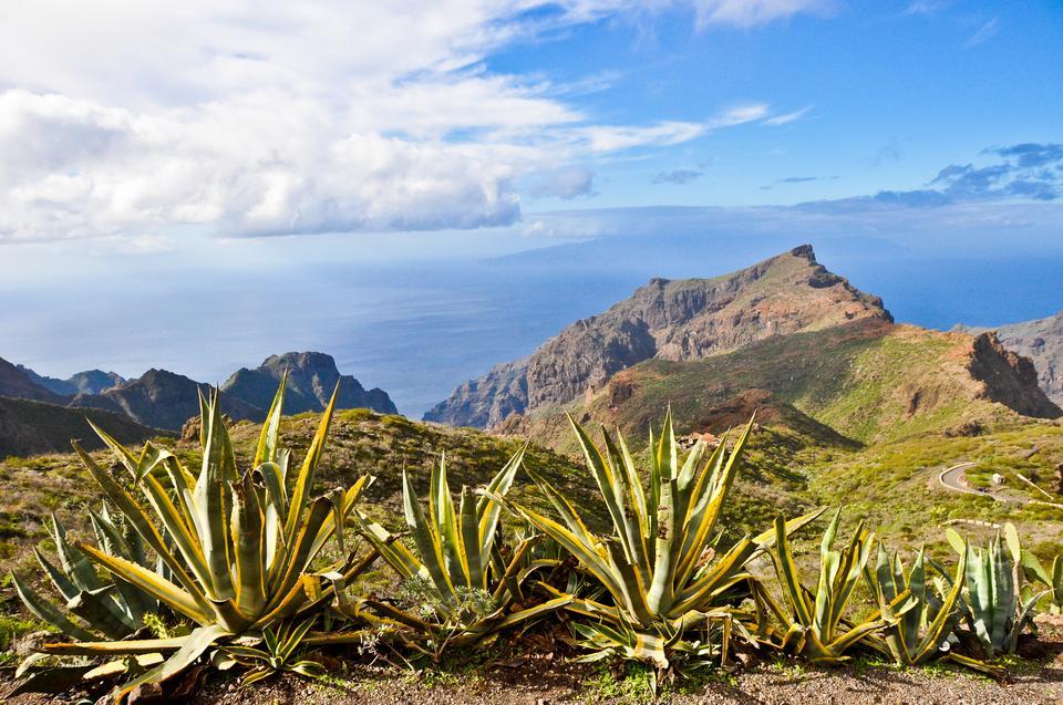 Teneryfa jest często określana mianem Wyspy Wiecznej Wiosny. Niemal przez cały rok jest tutaj słonecznie i ciepło. Średnie temperatury oscylują wokół 22-25 stopni C.