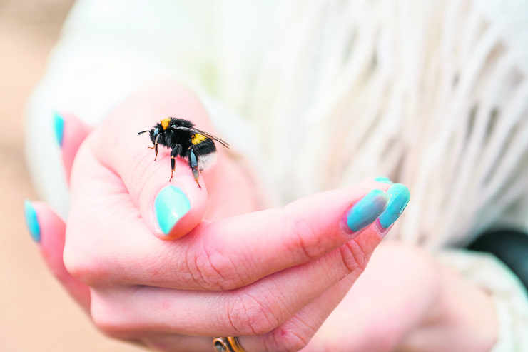 insekti, ujed, ubod, stock-photo-close-up-of-bee-sitting-on-womans-hand-with-blue-nails-1085625086