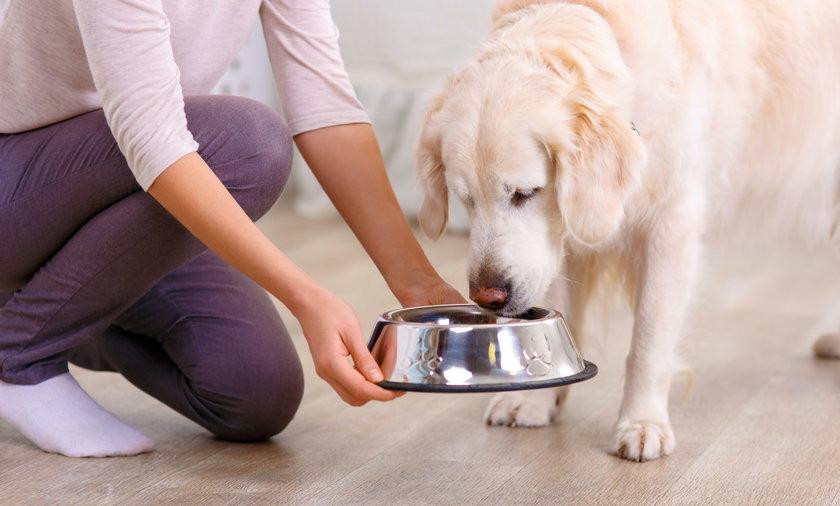 W psich miskach na wodę znajduje się sporo groźnych bakterii
