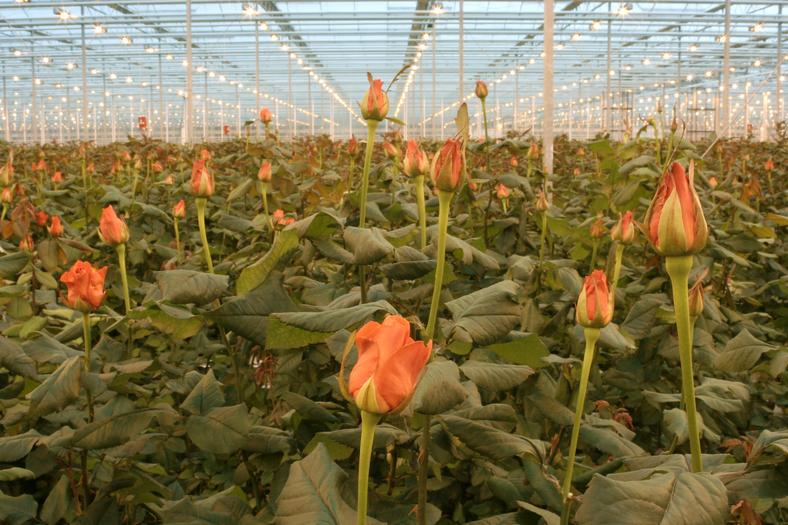 Flowers made the bulk of the earnings, bringing in a total of Sh113 billion ($1.13 billion).