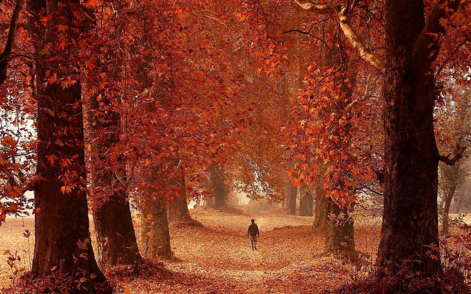 A man walks through a garden on an autumn day in Srinagar