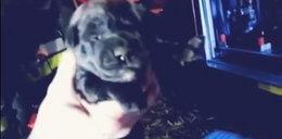 Uratowane szczeniaki uśpiono w schronisku! [FILM]