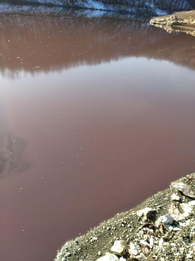 Nizak vodostaj jezera i topla jesen su uslovili cvetanje Vrutaka