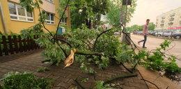 Odbiorą gałęzie złamane przez nawałnicę