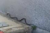 zmija sarajevo