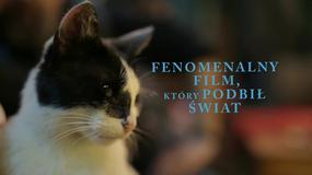 """""""Kedi - sekretne życie kotów"""": drugi polski zwiastun"""