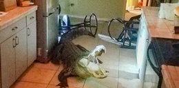 Myślała, że to włamanie. Zajrzała do kuchni i była w szoku