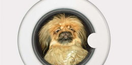 Właściciel wyprał psa w pralce. Zwierzak nie przeżył