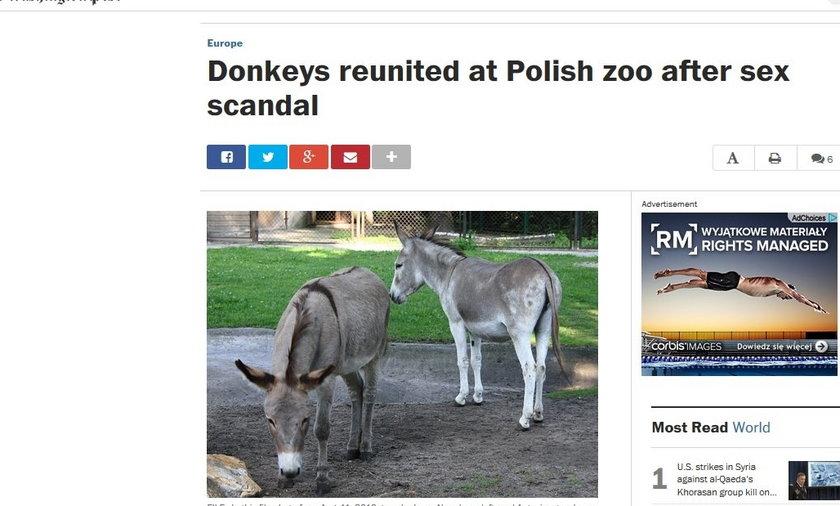 Washington Post napisał o poznańskich osłach.